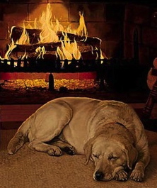 Warm-Cozy-Dog